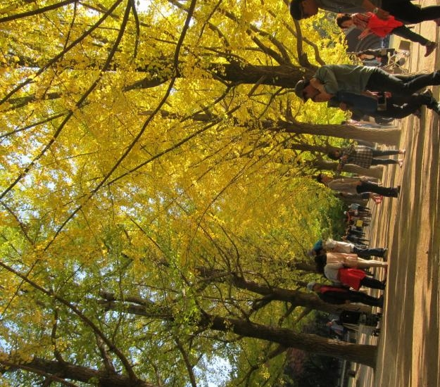 [No Shopping] Autumn Special- Nami Island+Railbike+ Chuncheon Myeongdong daily tour review photo 1