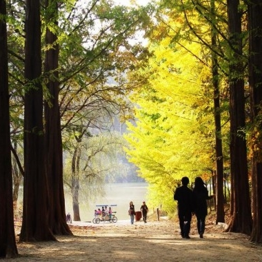 [No Shopping] Autumn Special- Nami Island+Railbike+ Chuncheon Myeongdong daily tour